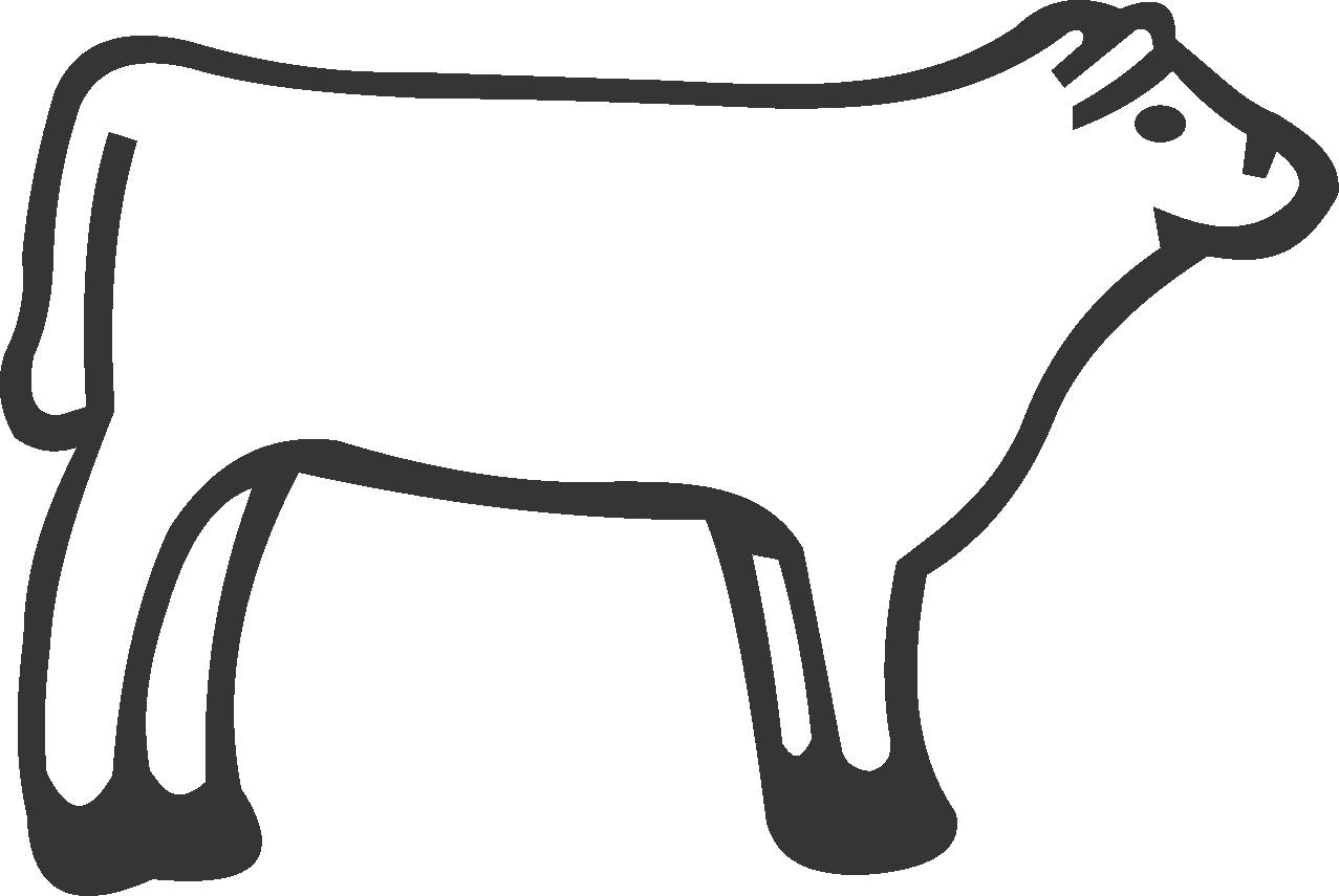 Heifer Steer